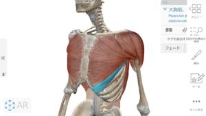 大胸筋の解剖学図